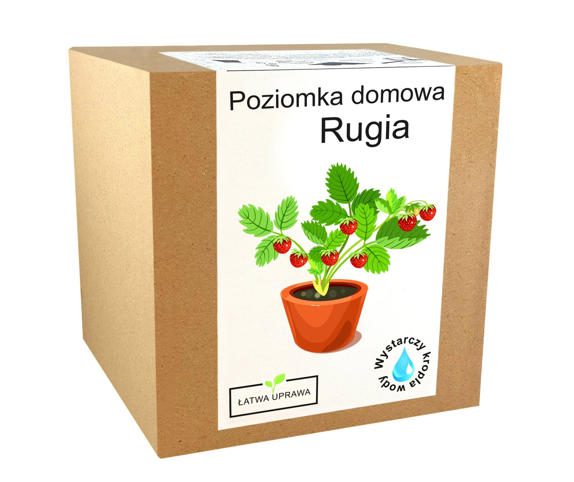 Набор для выращивания домашних семян клубники RUGIA