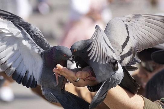 Karma dla Gołębi ZIMOWA Best-Natural 25KG Marka inna