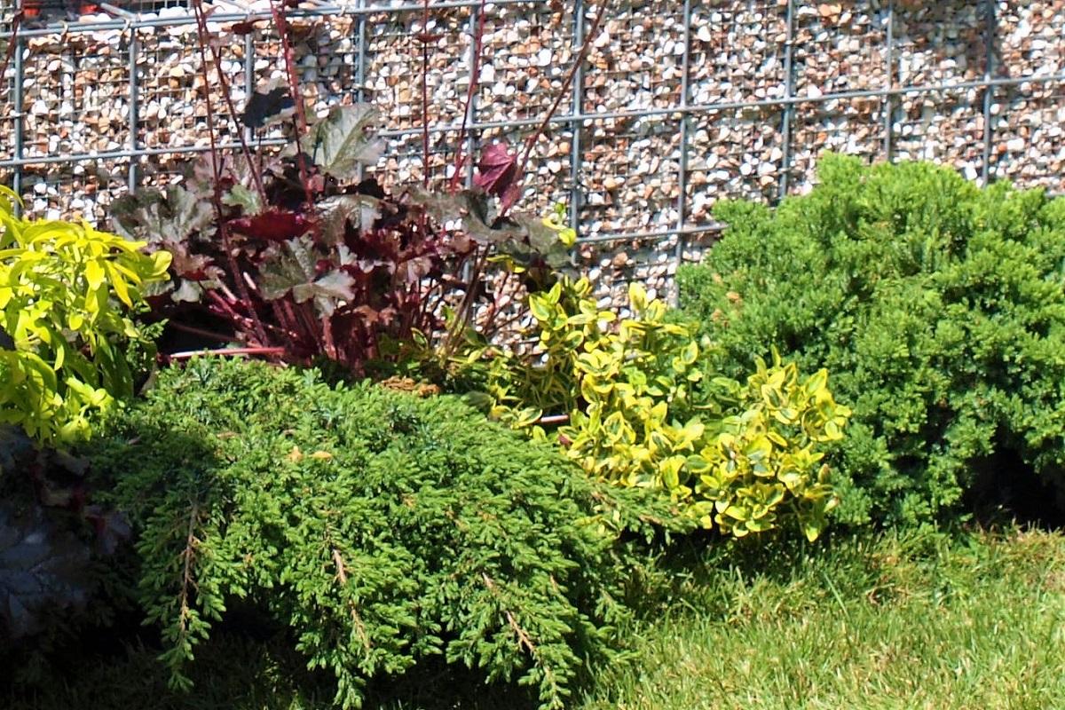 gabion plants