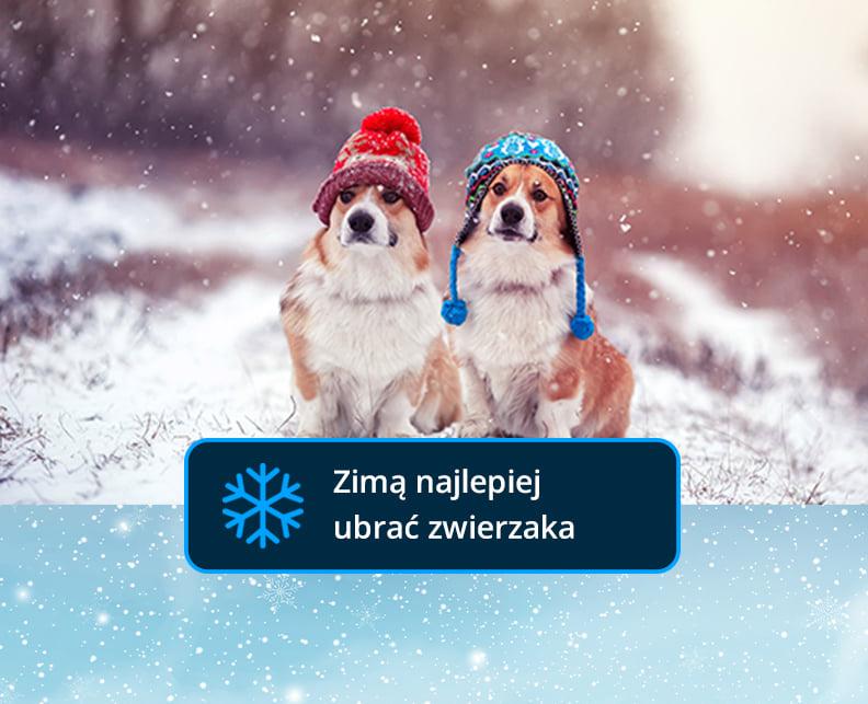 dla zwierzaków na zimę