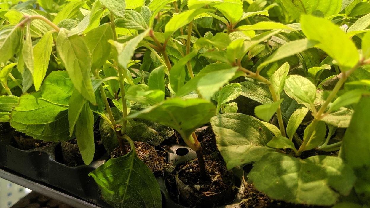 Ziemia i substraty do wysiewu nasion – jaką wybrać?
