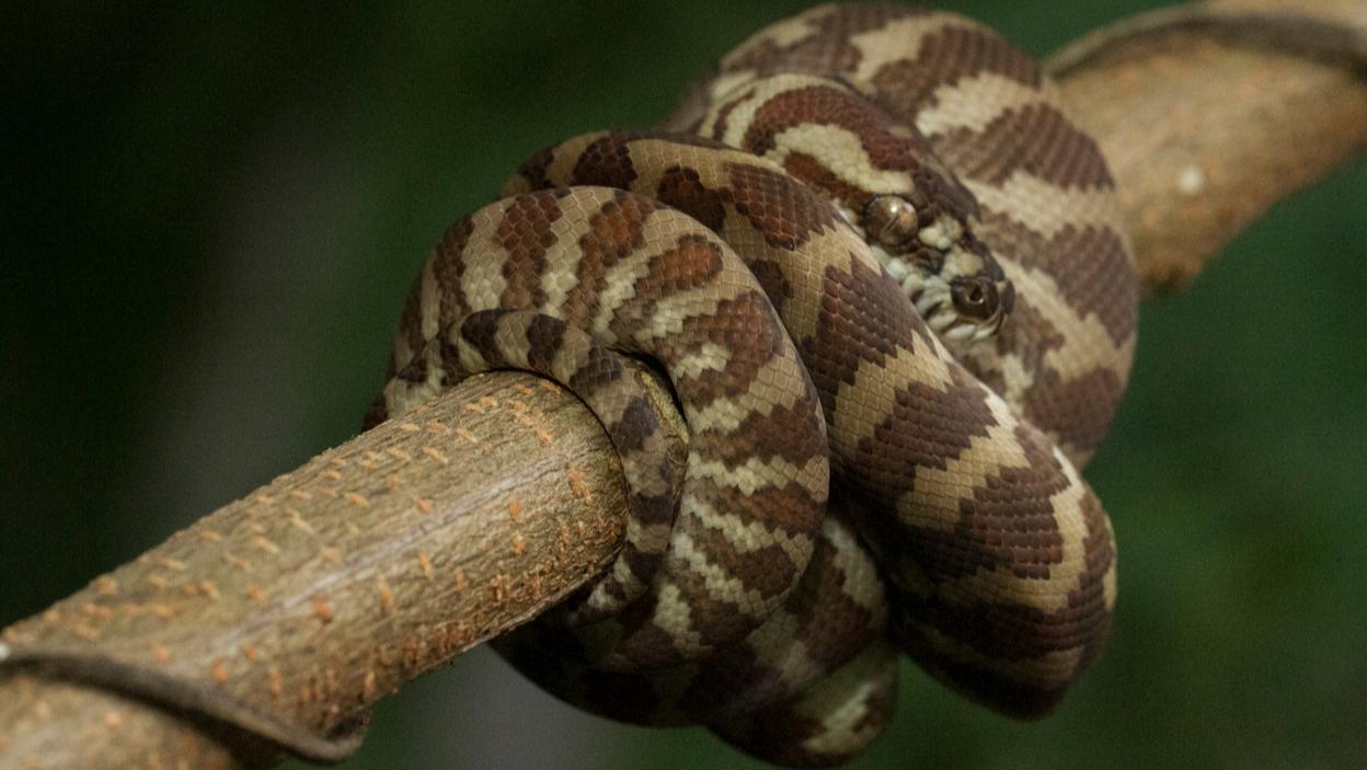 Węże dla początkujących