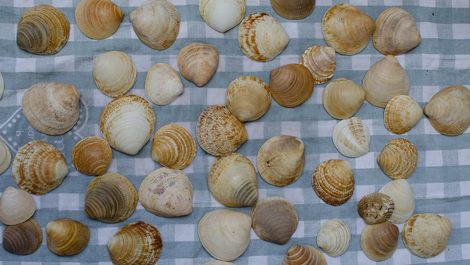 shell sorting