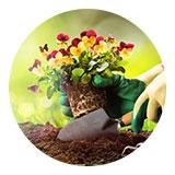 LP Garden