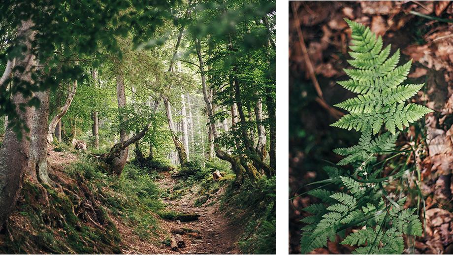 jak obcować z przyrodą