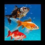 160x160 rybka lubi pływać