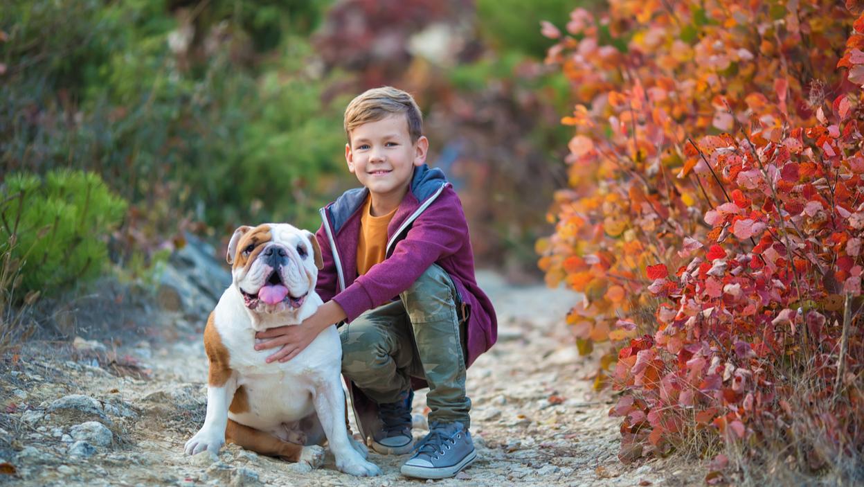 Jak dbać o psa rasy buldog angielski – zapotrzebowania, predyspozycje rasowe, opieka weterynaryjna