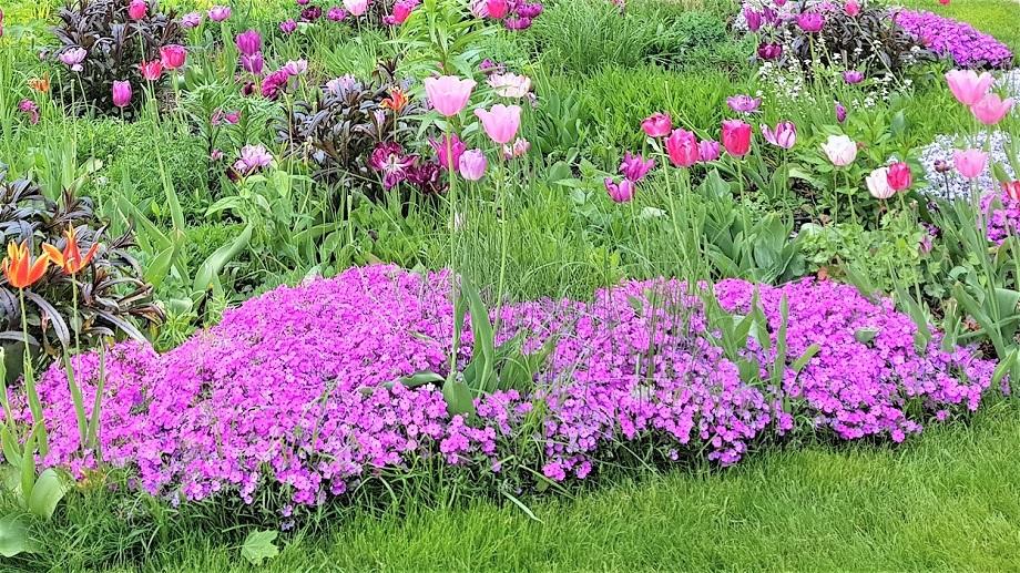 Kwiaty Wieloletnie Na Dzialke Allegro Pl