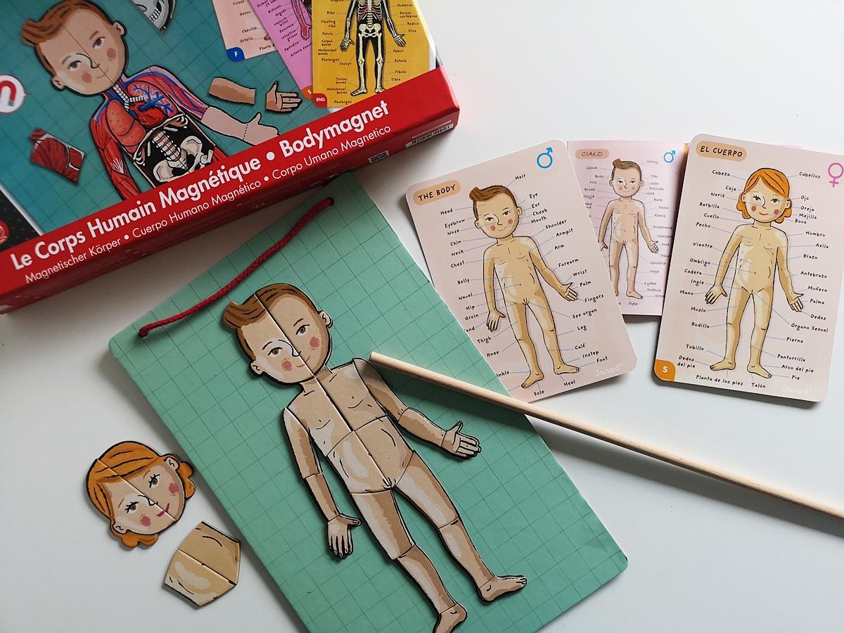 pri hraní s kartami a magnetmi uvedieme dieťa do štruktúry ľudského tela