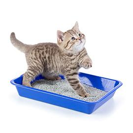 icon 270x270 żwirek dla kotka