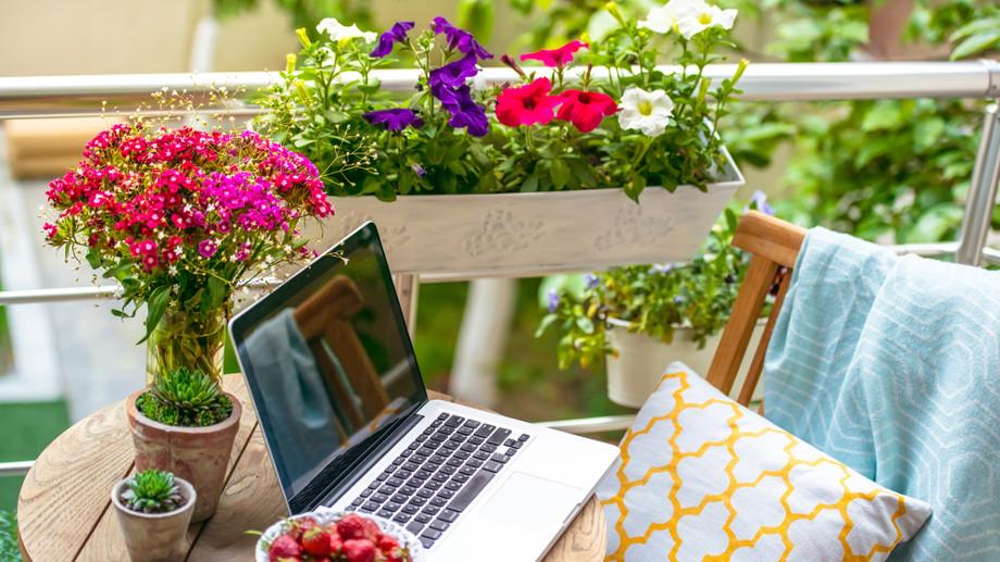 Kwiaty Na Nasłoneczniony Balkon Allegropl