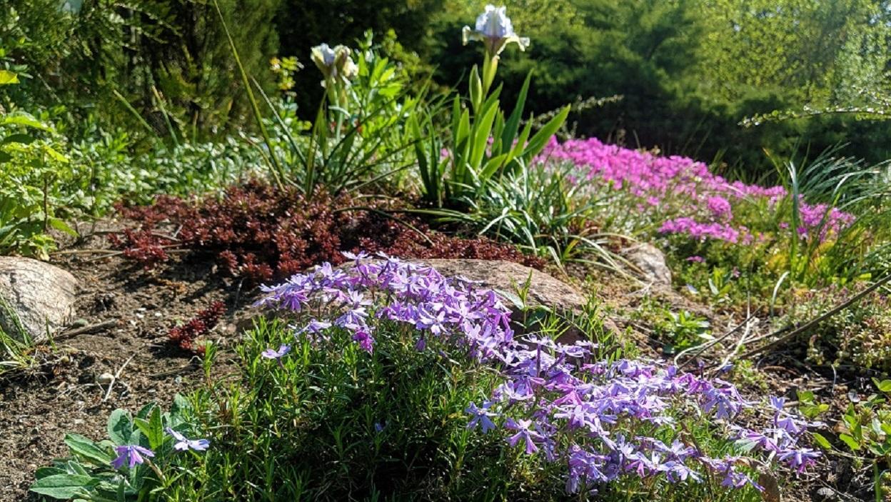 Kwiaty Wieloletnie Na Działkę