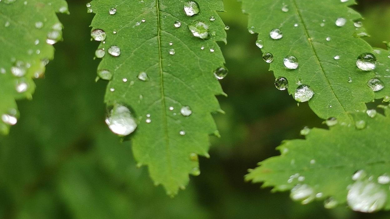 Hortiterapia – czyli ogrodowe remedium na wszystko