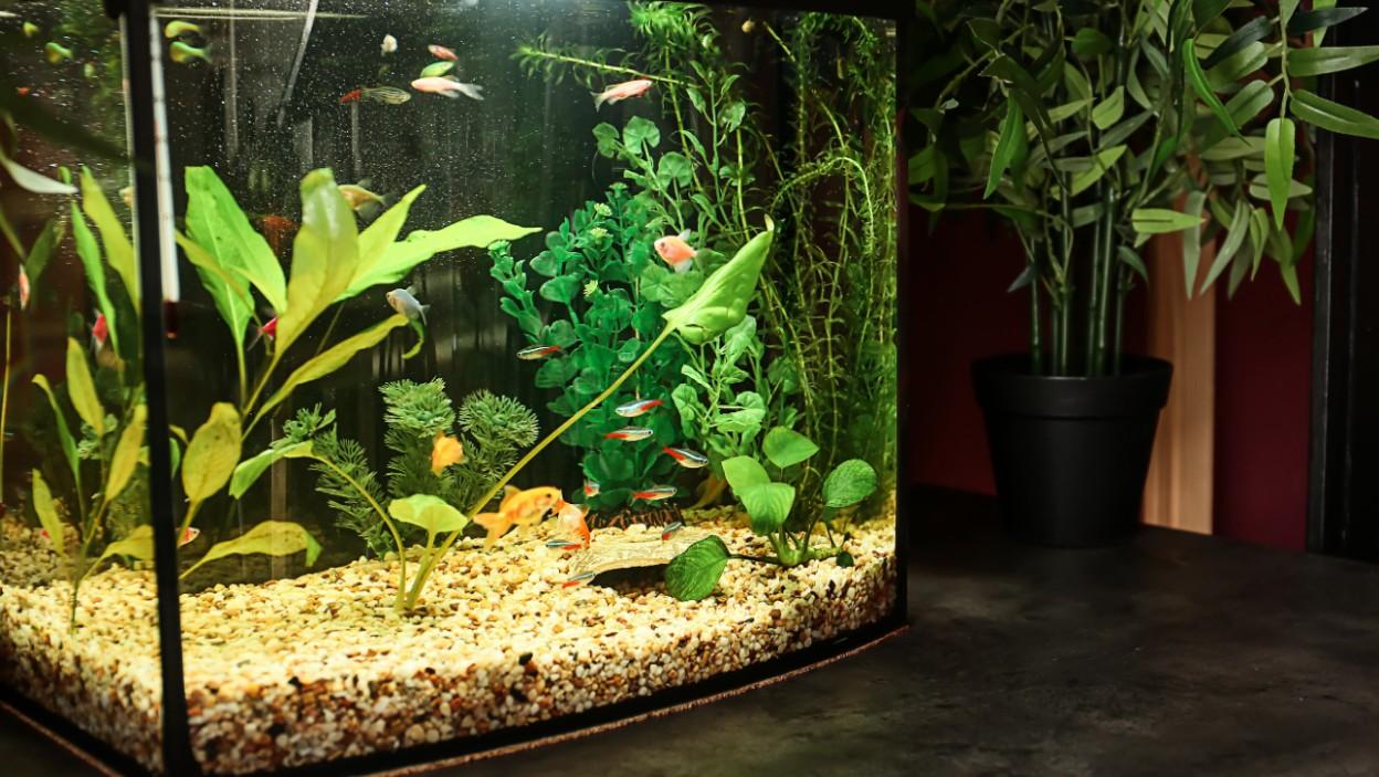 Akwarium  – nie tylko dla alergików