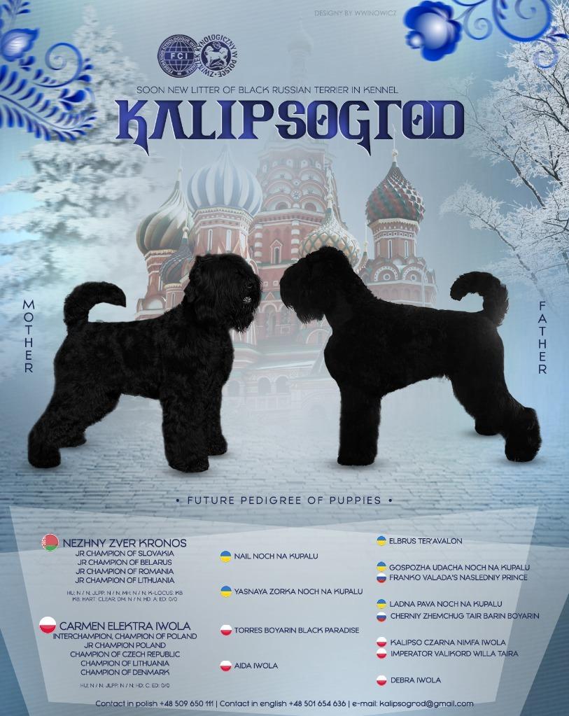 Czarny Terier Rosyjski szczeniaki ZKwP/FCI
