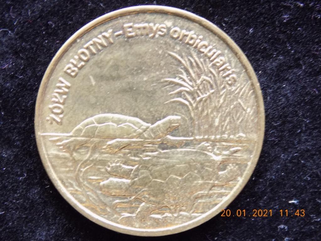 Żółw Błotny 2002 rok