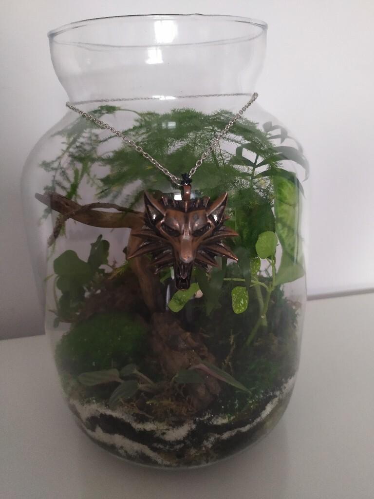 Ведьмак в Брокилоне, лес в стекле