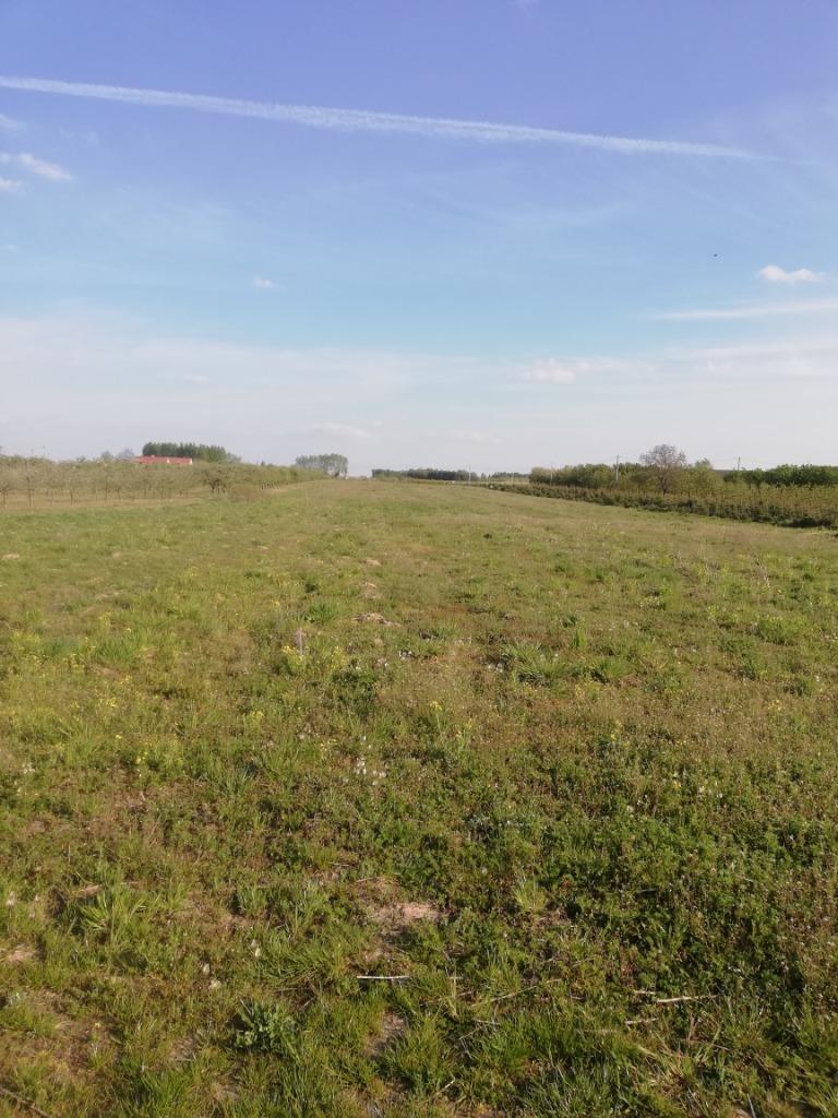 Działka rolna, Miedzechów koło Grójca, 20000 m²