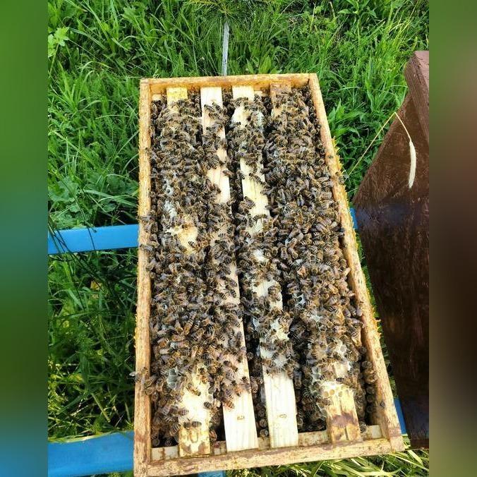 Odkłady pszczele i rodziny