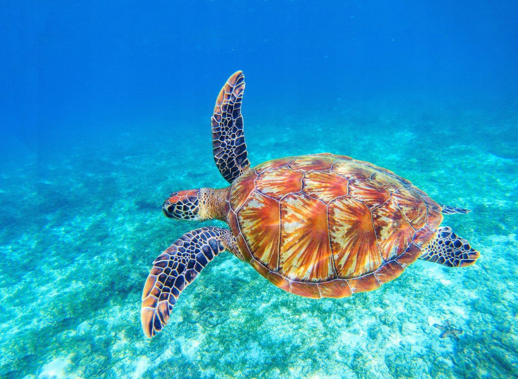 Fototapet Big Green Sea Turtle (300 x 223 cm)