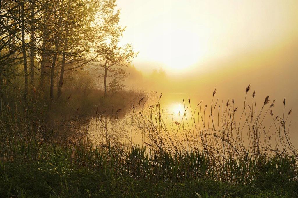 Fototapet Stunning Foggy Landscape (300 x 223 cm)