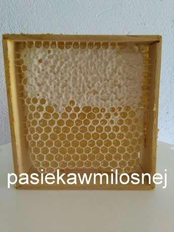 Miód - Dzień z Pszczelarzem - Pasieka w Miłosnej