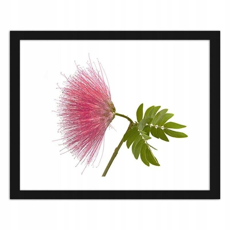 Obraz w ramie czarnej Różowy kwiat 2 80x60