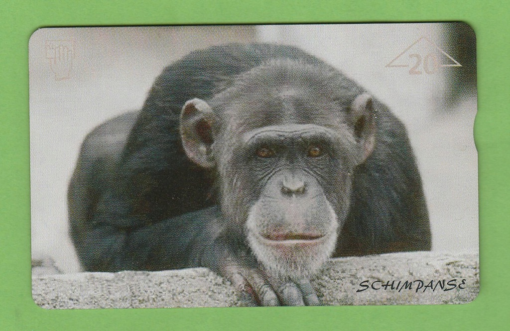 AUSTRIA fauna małpa szympans / seria 703L