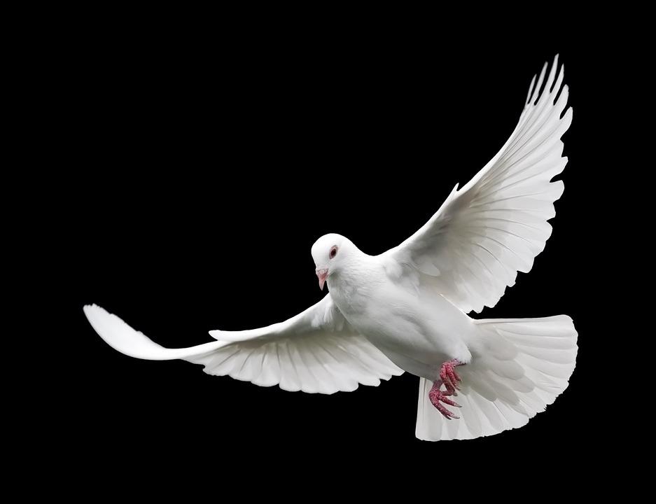 Gołębie zobacz