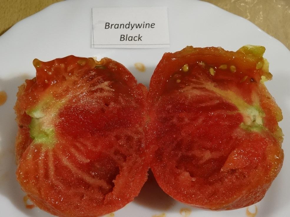 nasiona pomidora BRANDYWINE BLACK