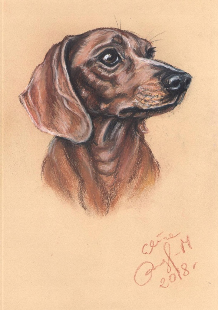 Jamnik - portret psa