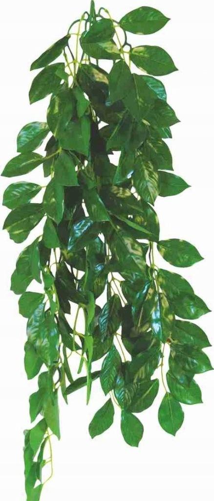 Roślina do terrarium Ficus Happet 70cm