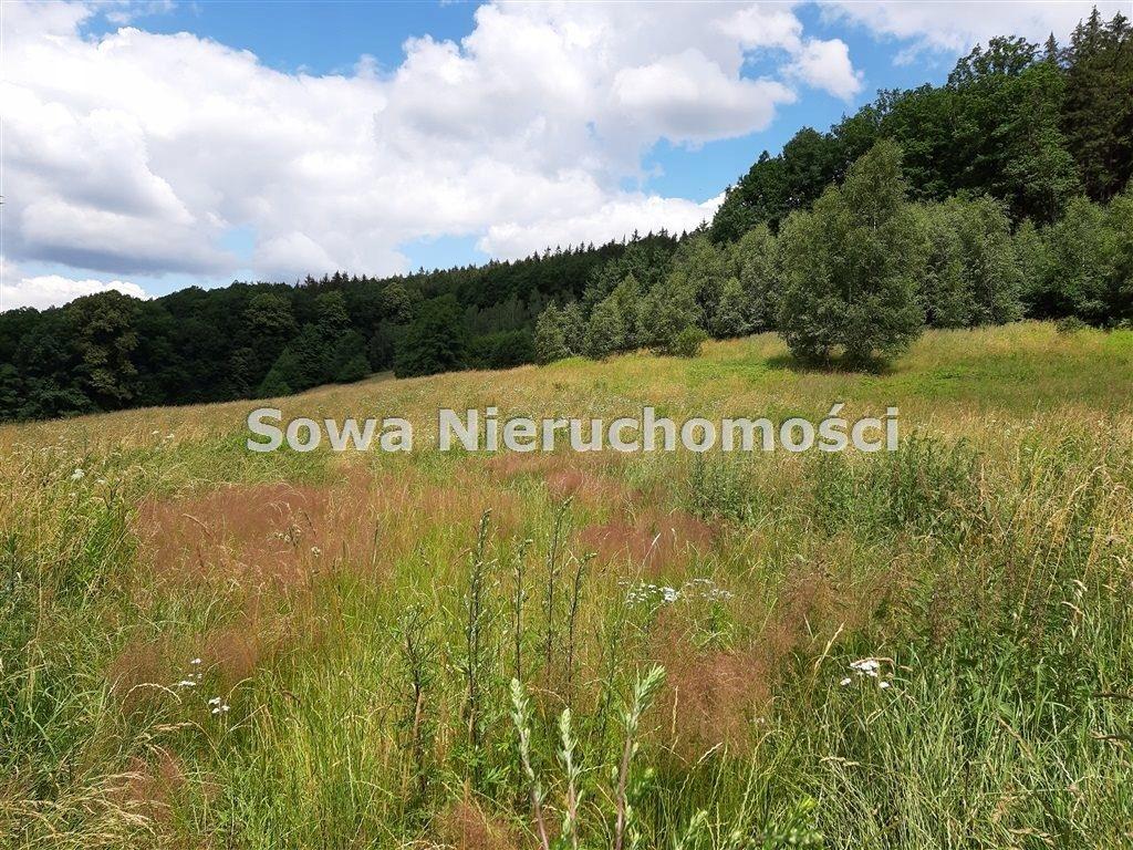 Działka, Michałkowa, Walim (gm.), 8740 m²