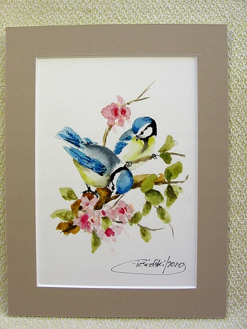Ptaki Polski - Sikora modra