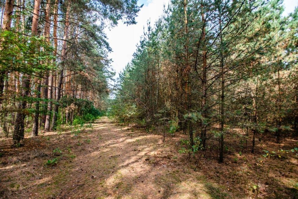 Działka, Zielona Góra, Ochla, 1156 m²