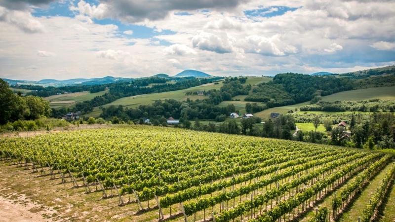 Zwiedzanie winnicy z degustacją wina dla 2 osób.