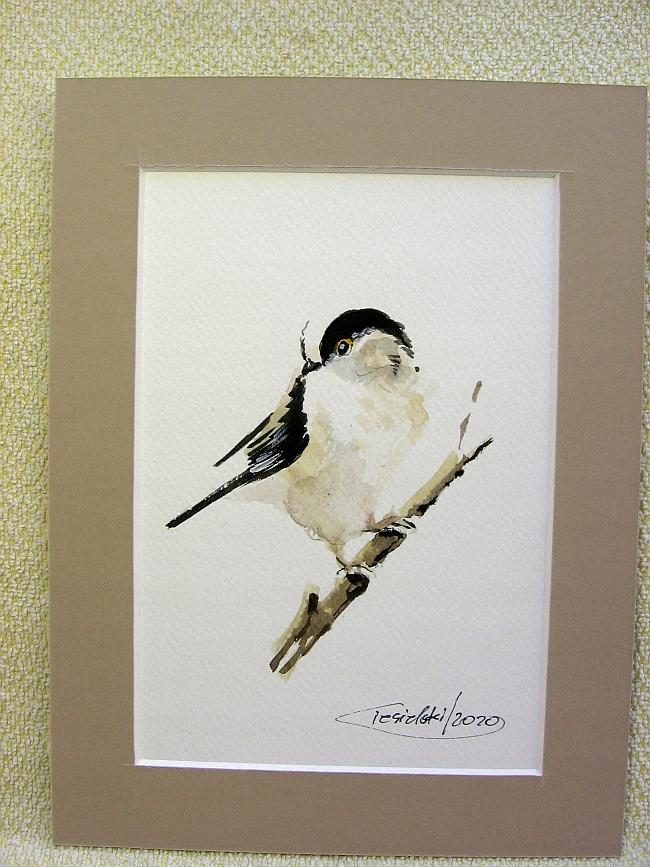 Ptaki Polski - Raniuszek