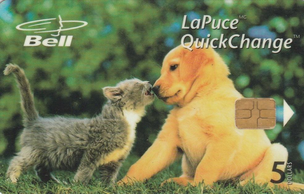 Kanada - Kot i pies