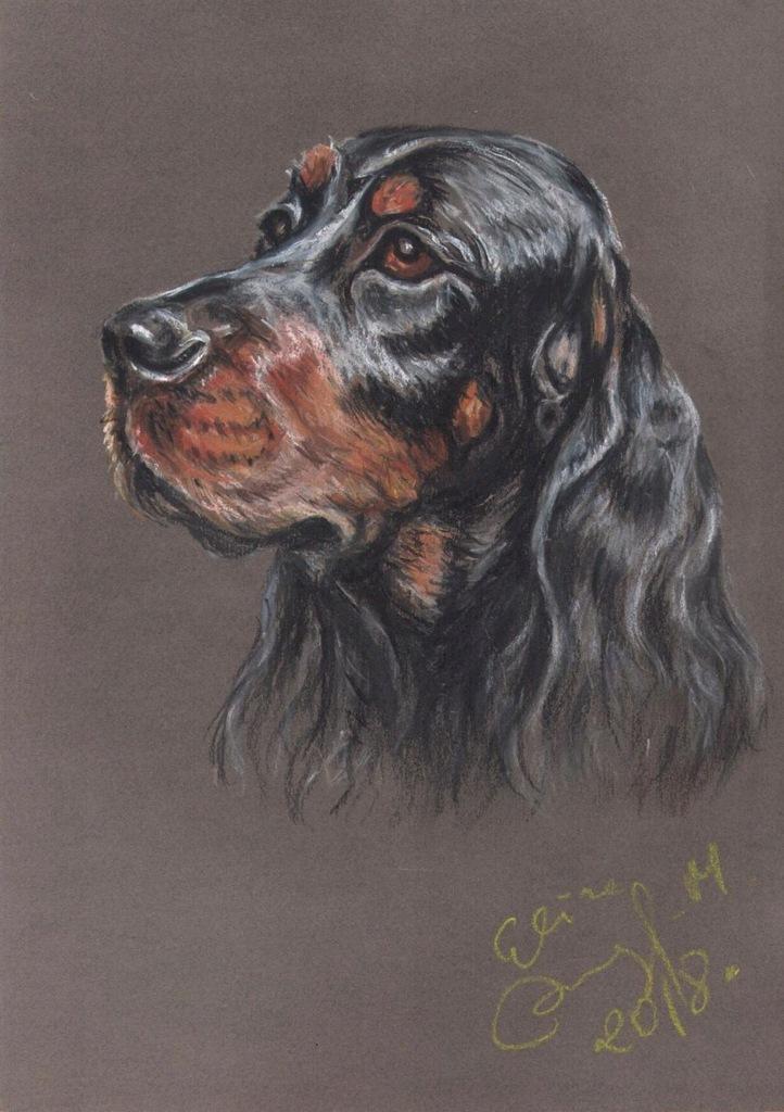 Gordon seter szkocki - portret ps