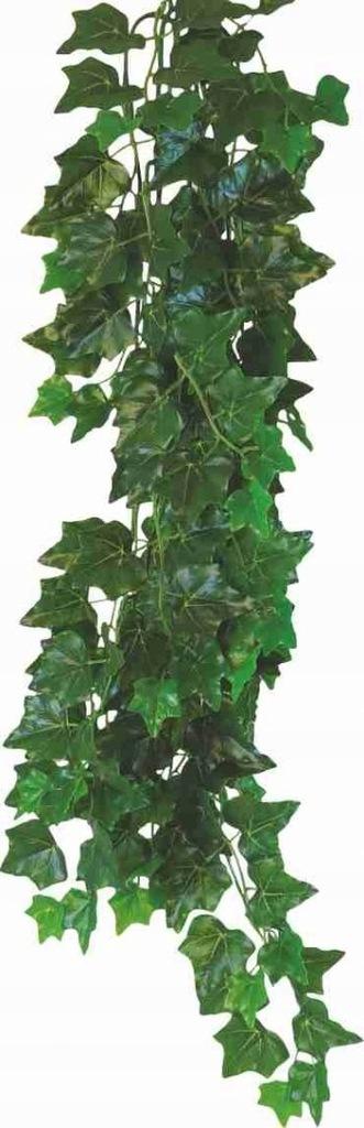 Roślina do terrarium Hedera Helix Happet 70cm
