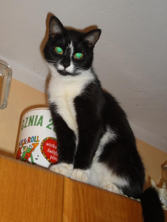 "Kotek Kot Super Tapeta Na Pulpit pt ""Pomagam WOŚP"""