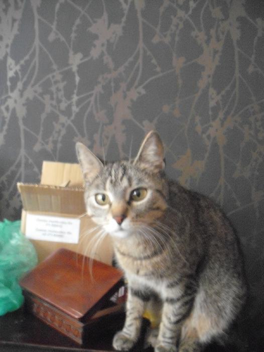 Kotka Antosia - zdjęcie