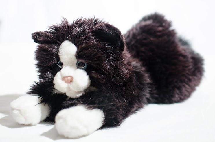 Futrus - kot wróżbity Macieja