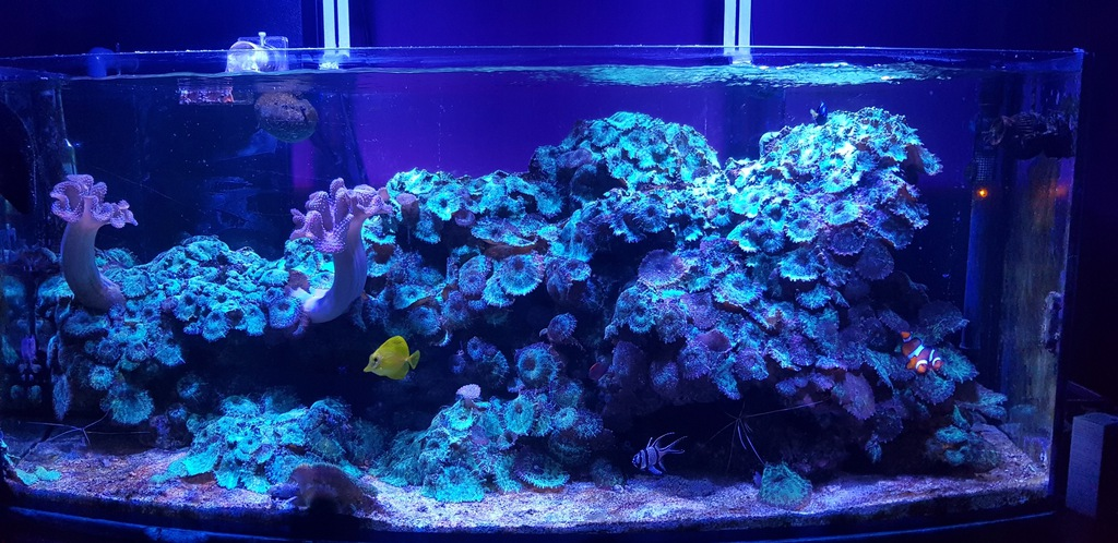 Akwarium Morskie 200L+Blau Lumina 454 4x54W 122cm
