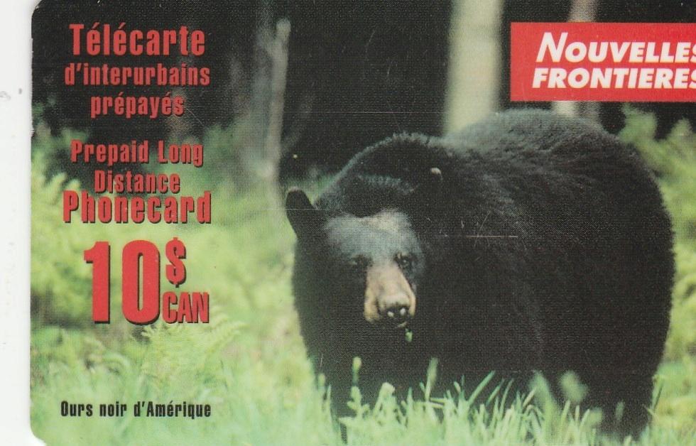 Kanada - Niedźwiedź