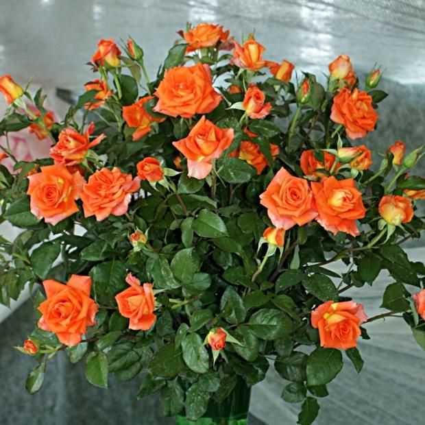 Roza Monnica Wielkokwiatowa Idealna Na Kwiat Ciety 7420726155 Oficjalne Archiwum Allegro
