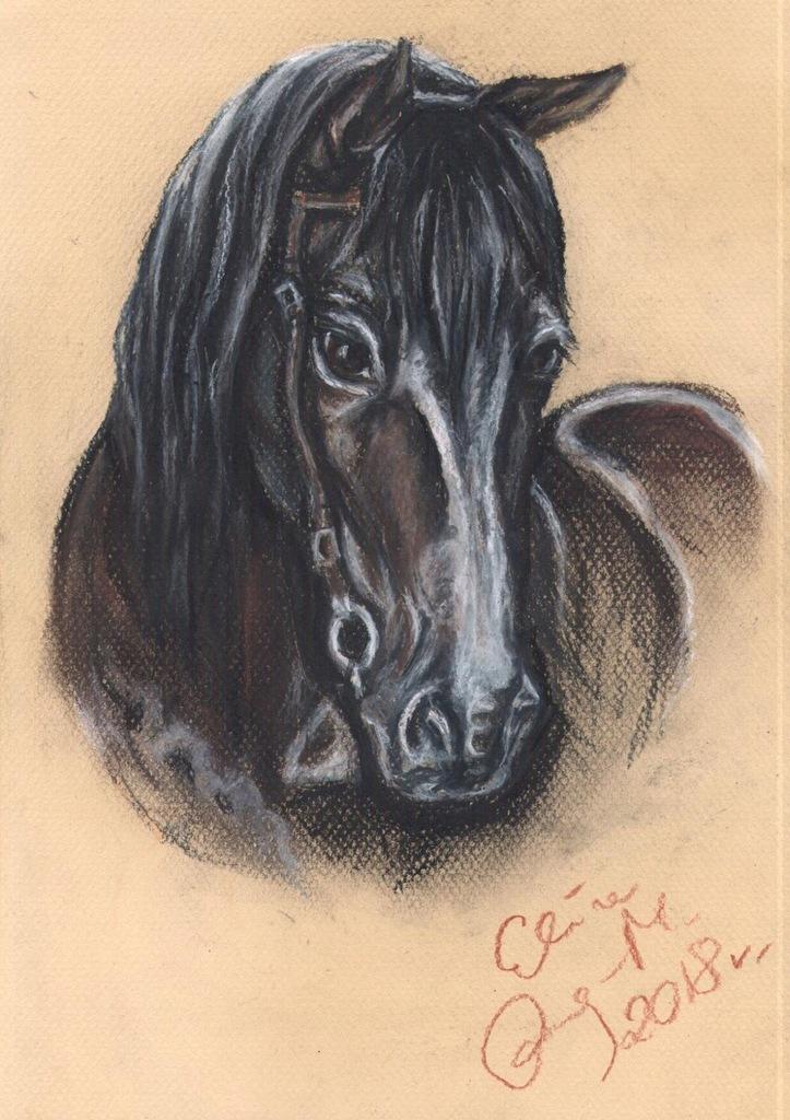 Koń - portret konia