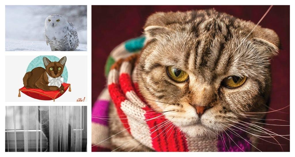 Pocztówki ze zwierzętami Postcrossing