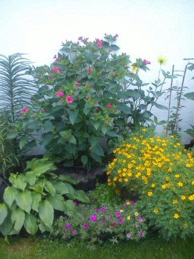 Dziwaczki- nasiona- gramy trzeci rok