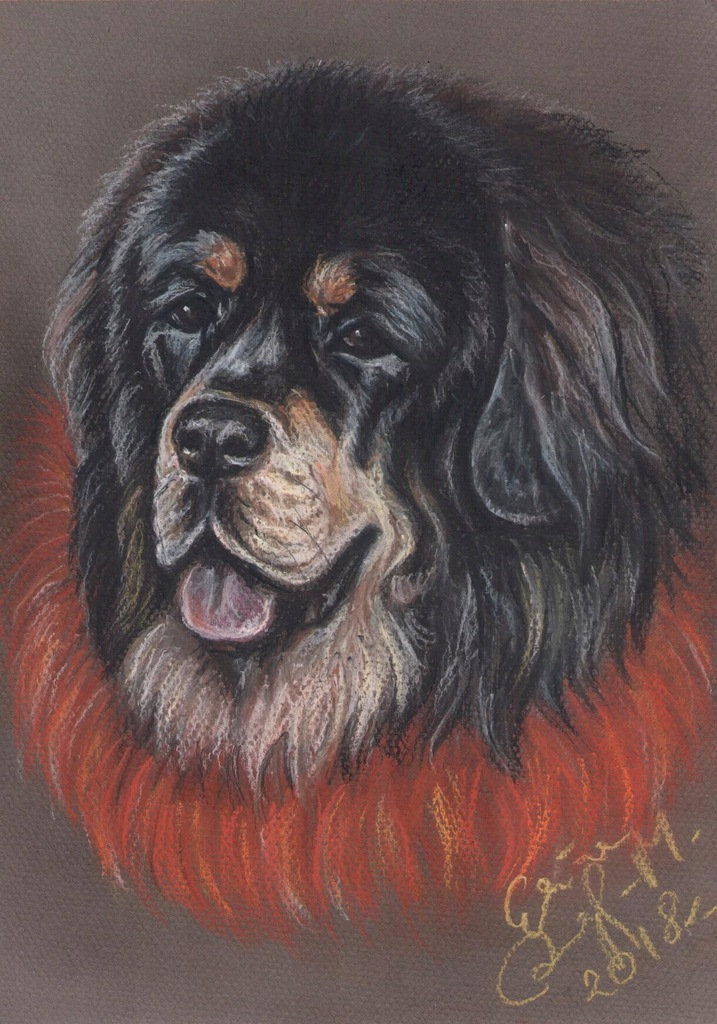 Mastif tybetański, do-khyi - portret psa